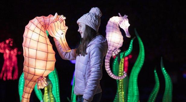 Win tickets to Wild Lights with the Sunday Independent!